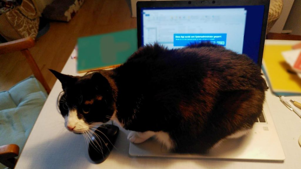 Kater Cobi liebt es, sich auf den Rechner zu legen. foto: Romy