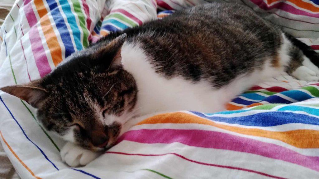 Kater Joschi genießt auch mal das Bett für sich alleine. foto: Romy