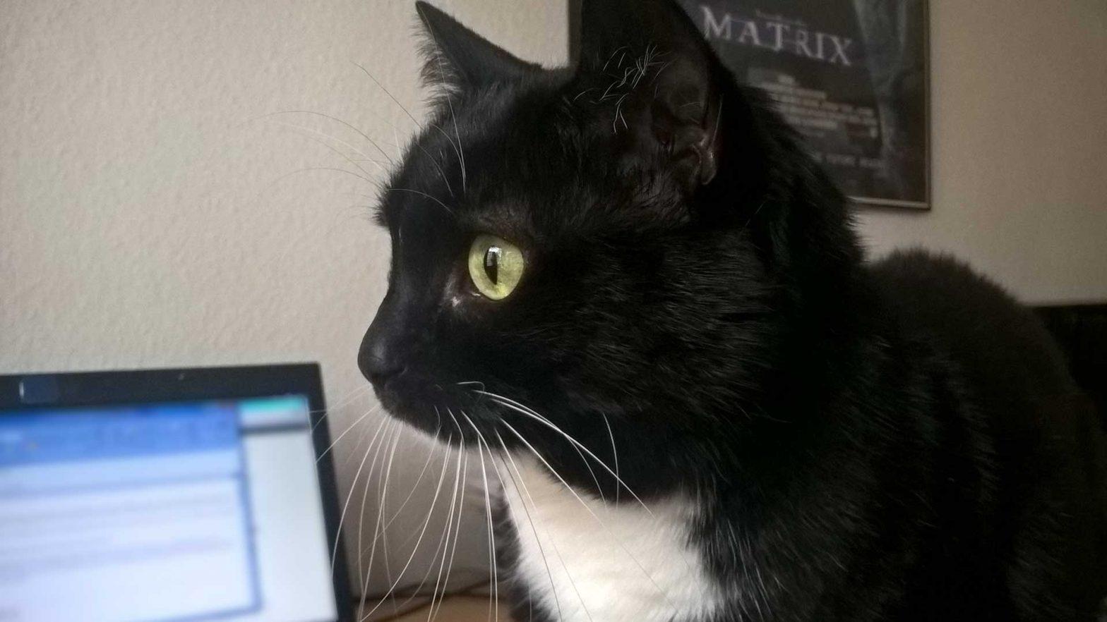 Mit Katze im Homeoffice: Luzi auf dem Schreibtisch