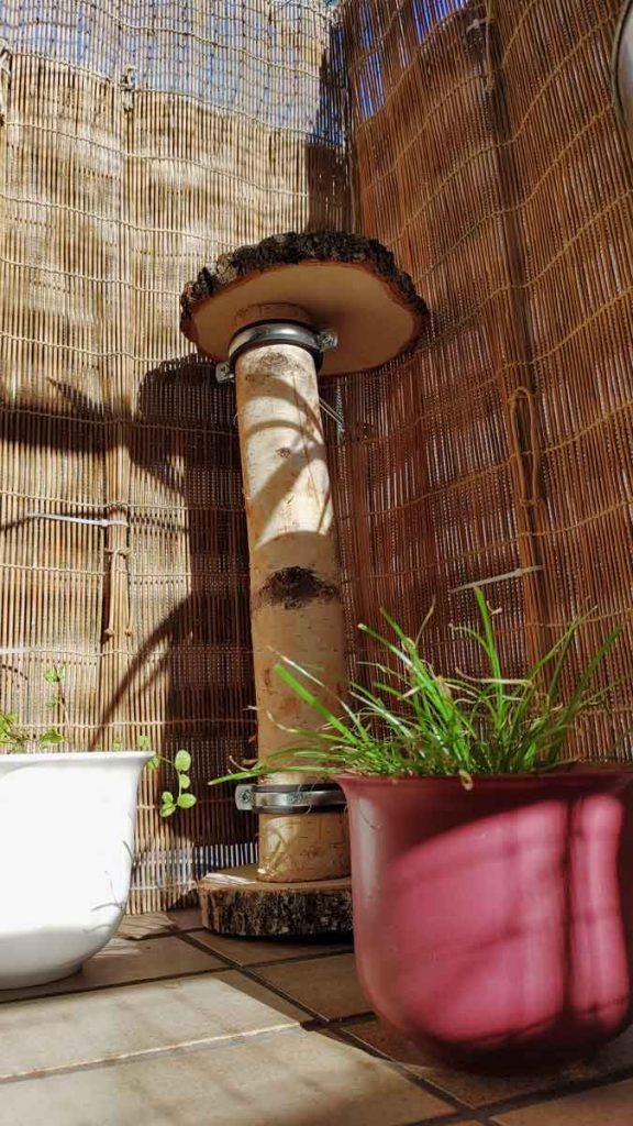 Bietet den Ausblick: Kratzbaum aus Birkenstamm und Birkenscheibe