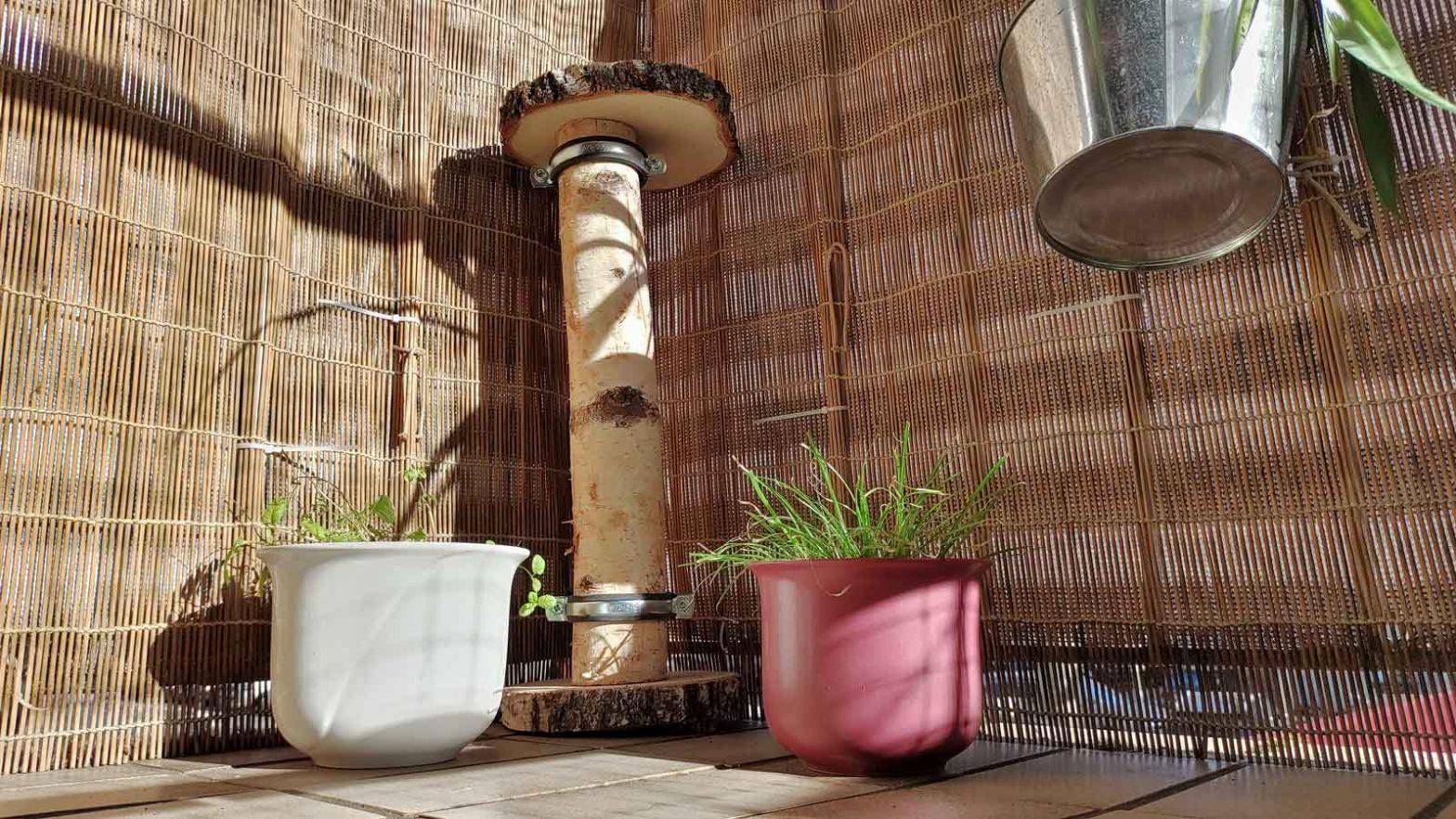 Kratzbaum aus Baumstamm und Baumscheiben für die Luzi