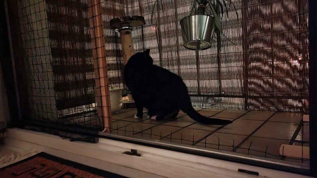 Luzi schaut sich vorsichtig auf dem neuen Balkon um