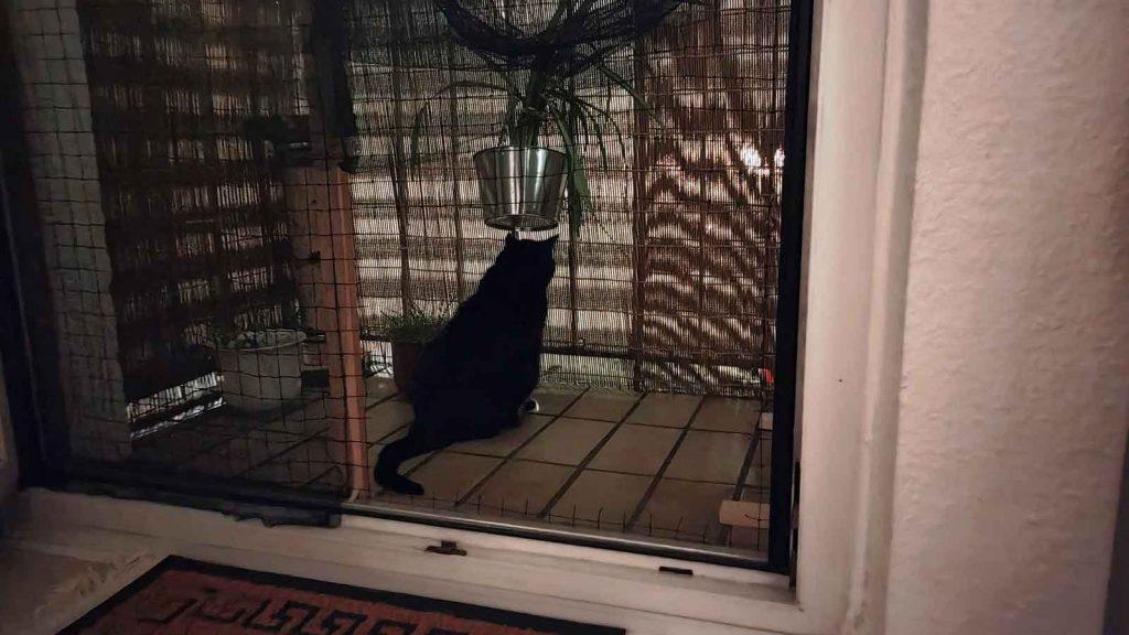 Katzensicherer Balkon: Luzi schaut durch die Balkonumrandung