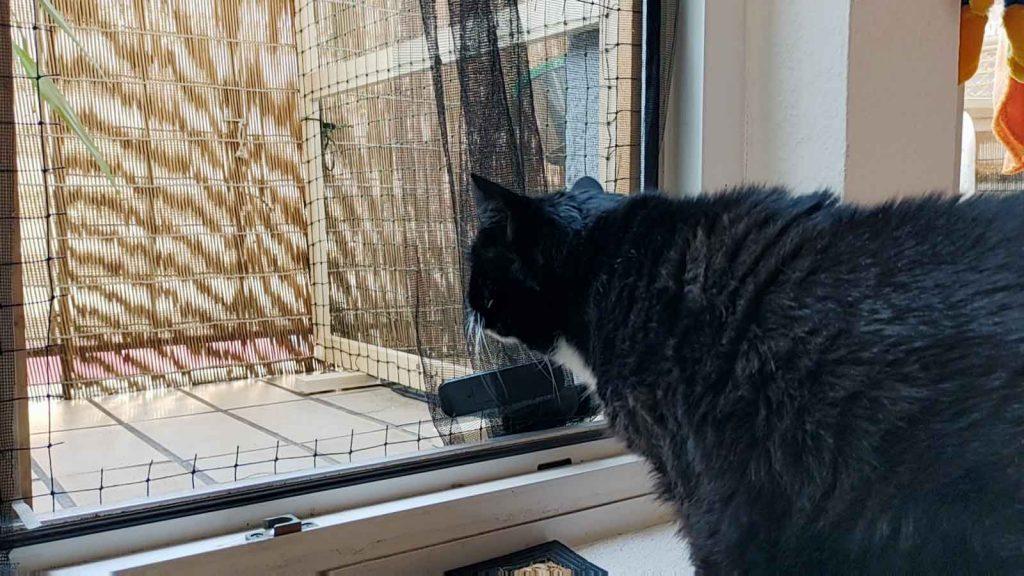 Luzi traut sich nicht raus auf den neuen Balkon