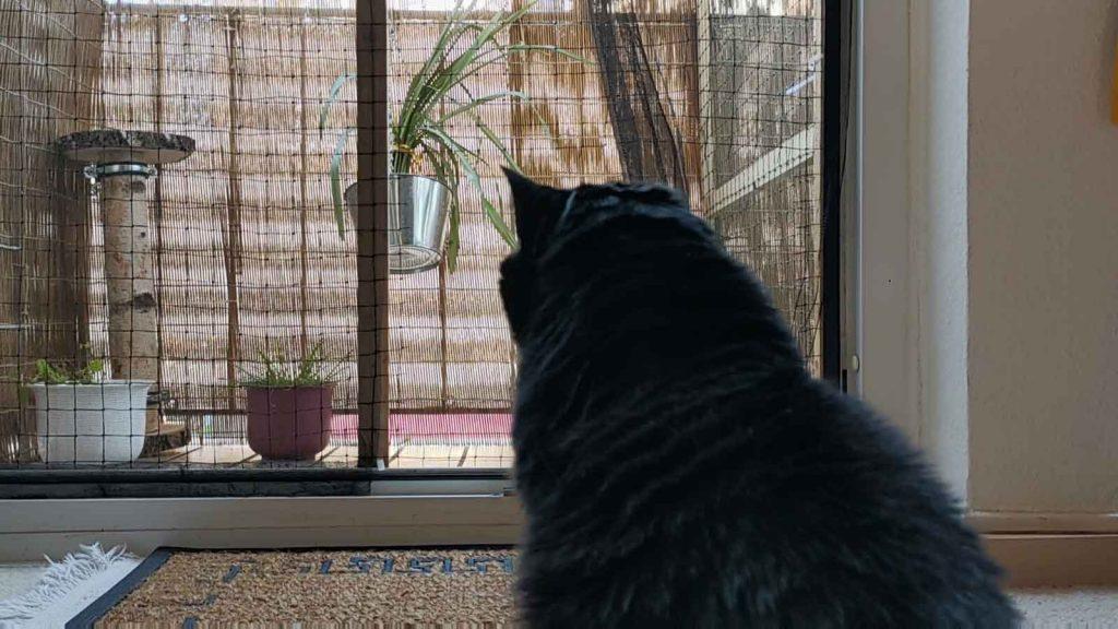 katzensicherer Balkon = Balkon ist sicher vor der Katze, die sich nicht hinaustraut
