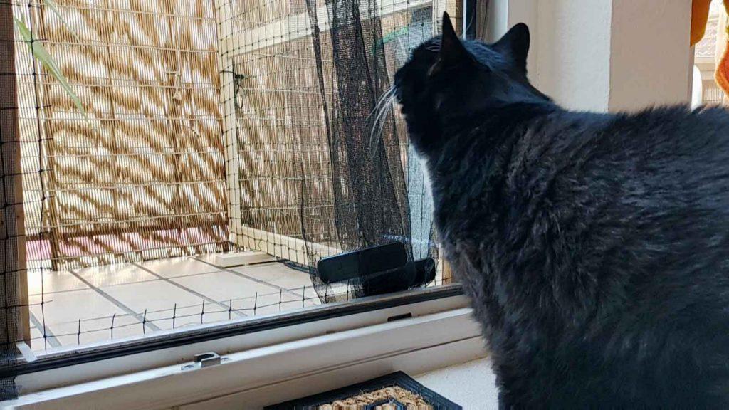 Luzi schaut auf ihren neuen Balkon