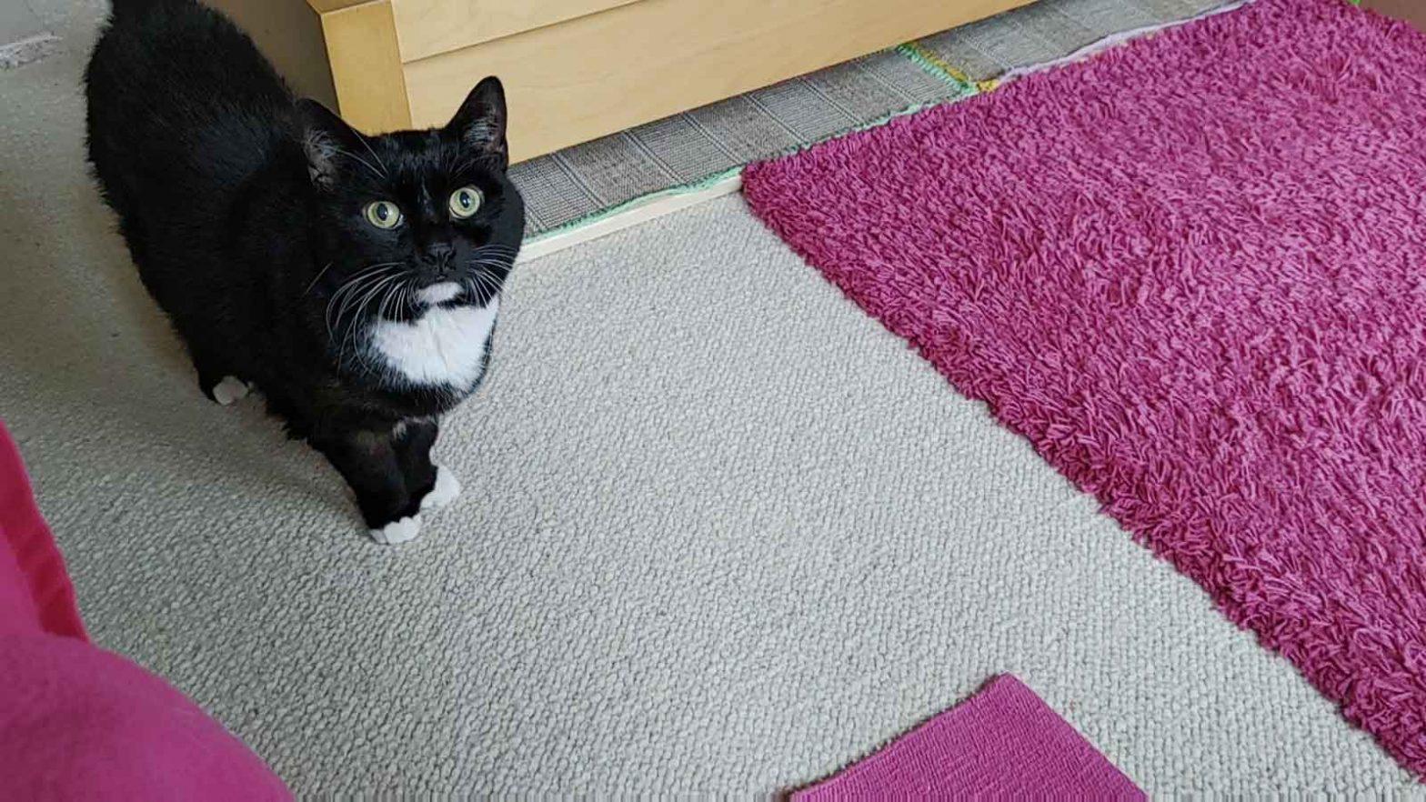 Mit diesem Blick bezirzt Katze Luzi auch unsere Nachbarn