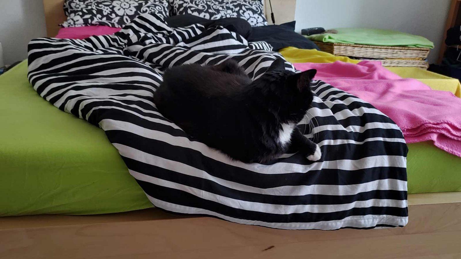 Katze liegt am Fußende vom Bett