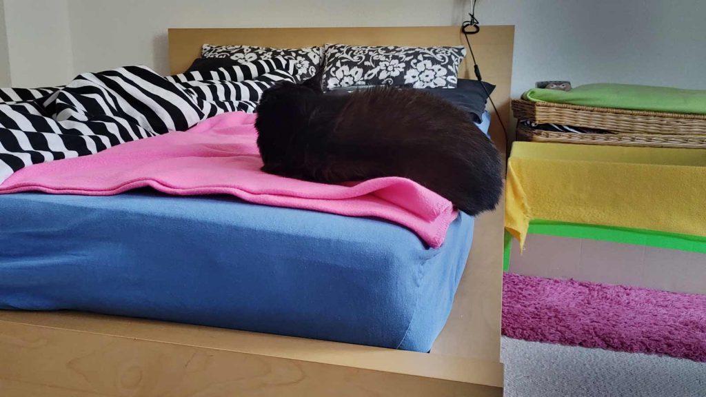 Luzi liebt die Kante: Katze schläft am Fußende.