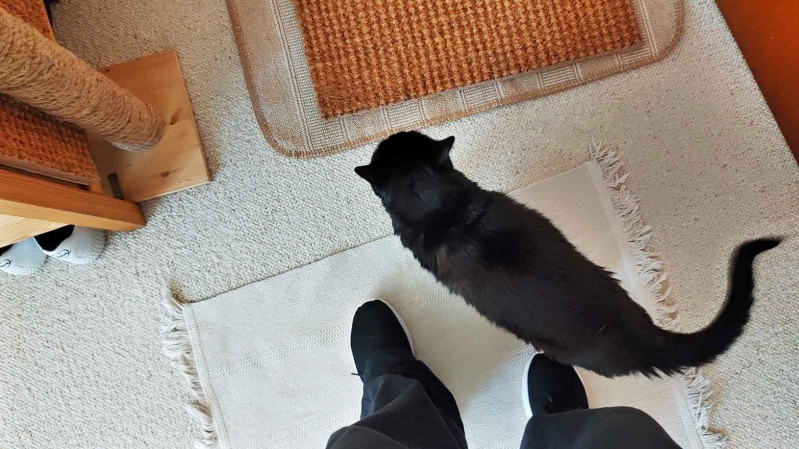 Katze läuft zwischen Beinen. Luzi ist eine Meisterin dieses Faches.