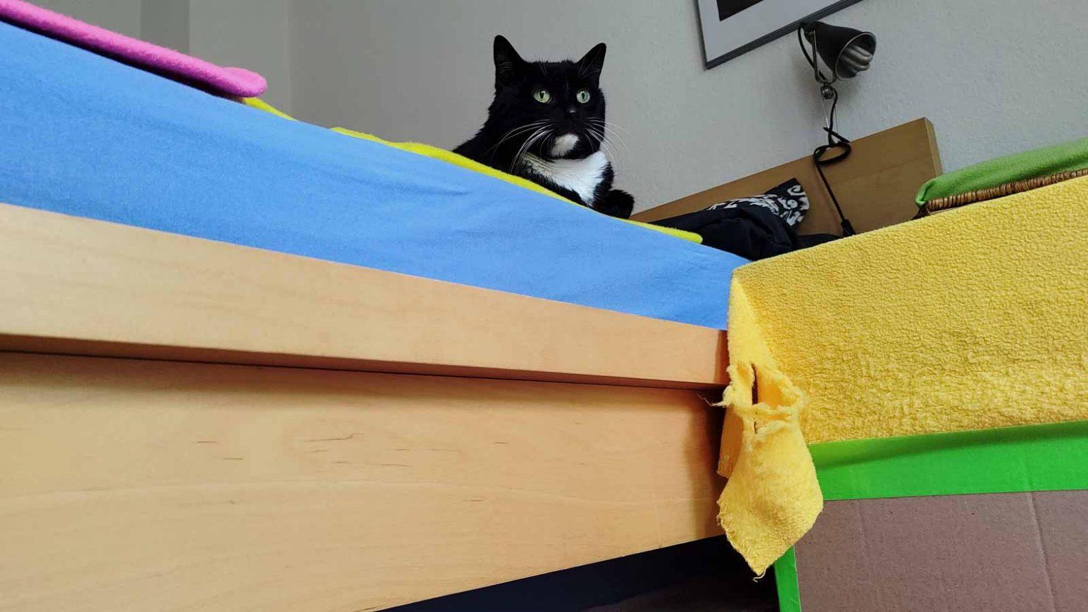 Luzi ist eine Katze, die Gedanken lesen kann. Das Trampolin darf jedenfalls nicht weg.