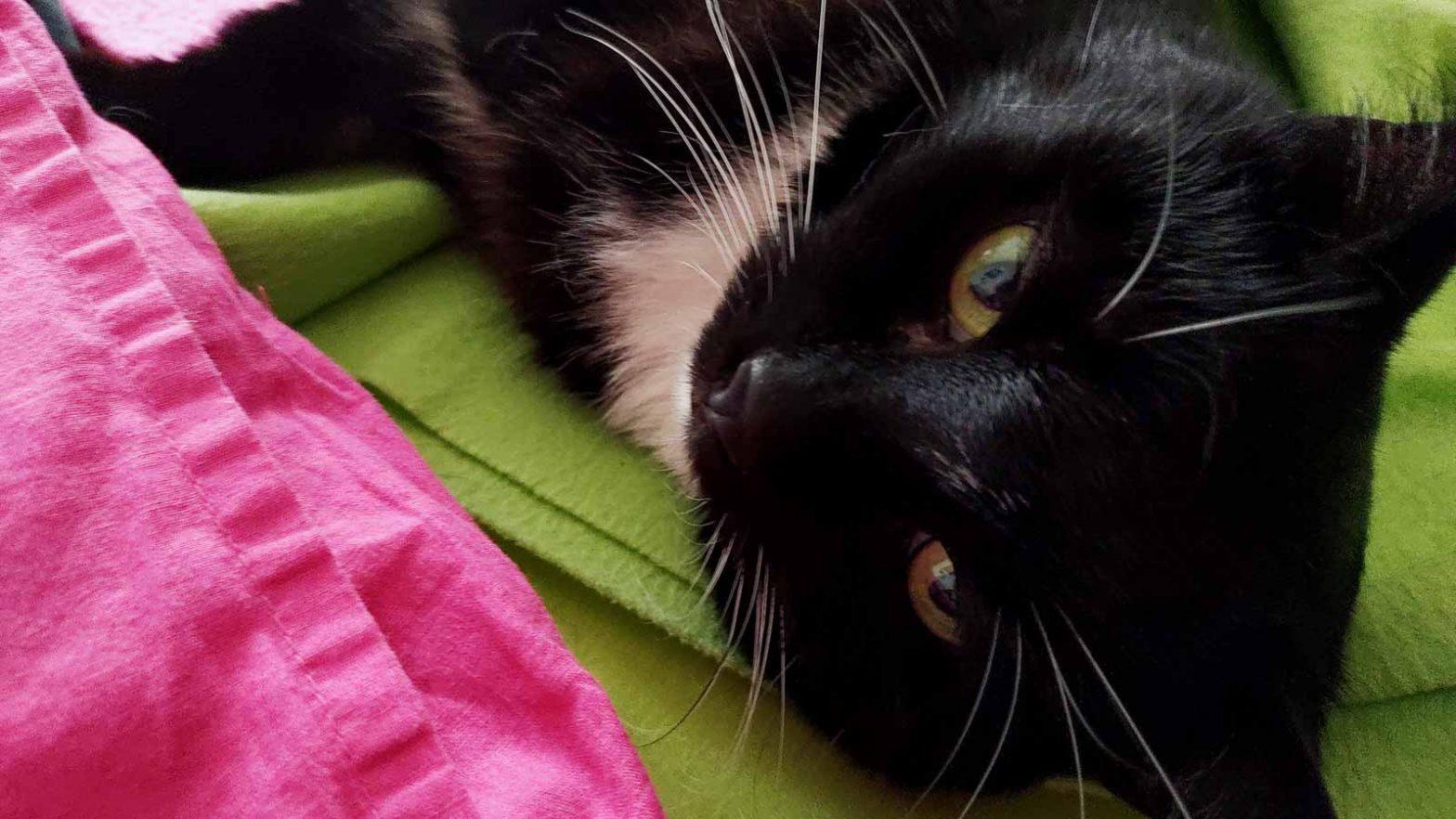 Wenn die Katze ihren Menschen wählt: Luzi schickt Liebesblicke