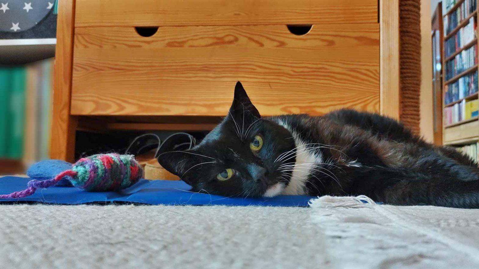 Luz dem Kopf auf ihrer Kühlmatte für Katzen
