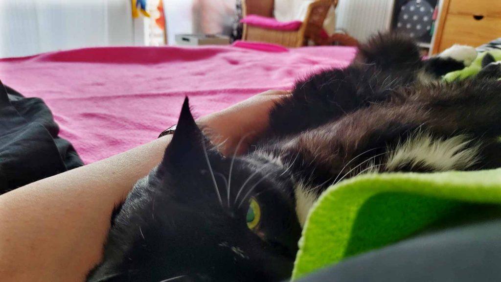 Katze Luzi schmiegt und räkelt sich an ihrem Menschen